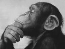 monkey-albarn.jpg