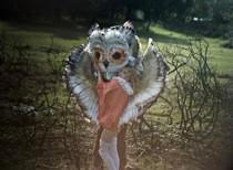 goldfrapp-little_bird.jpg