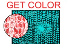 HEALTH Release <em>Get Color</em> Details