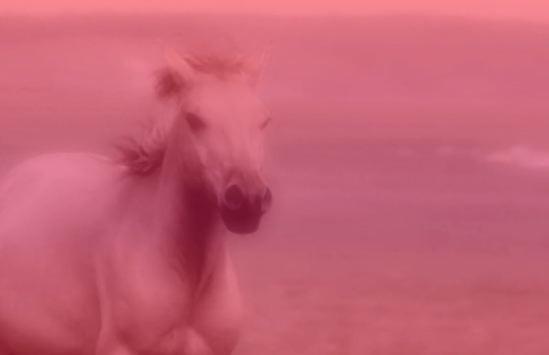 """Korallreven - """"The Truest Faith"""" Video"""