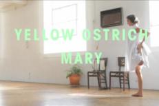 Yellow Ostrich -
