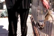 "Crystal Antlers – ""Dog Days"" Video"