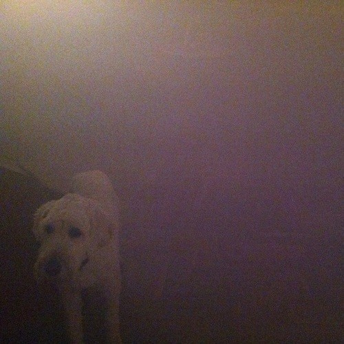 Oneohtrix Point Never - Dog In The Fog