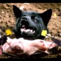 """Joanna Gruesome – """"Sugarcrush"""" Video"""