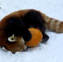 The Petting Zoo: