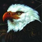 Mogwai – The Hawk Is Howling
