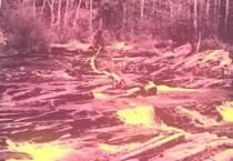 deerhunter-videos-adam_bruneau.jpg