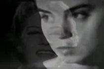 "New Fight Bite Video – ""Swissex Lover"""