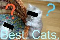 bestcats.jpg