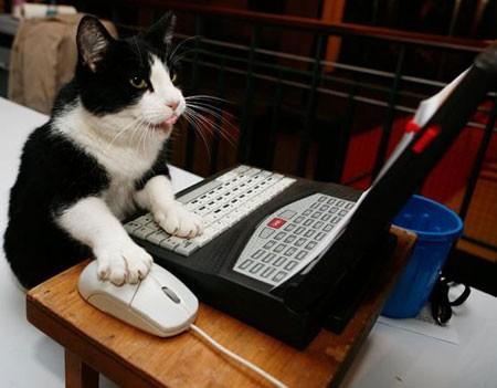 cat_computer.jpg