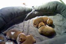 puppyfeed2.jpg