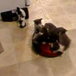 Kittens On A Roomba