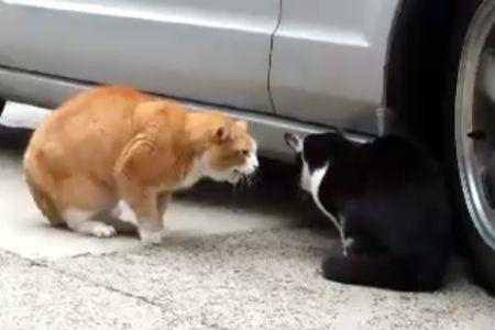 catsyelling.jpg
