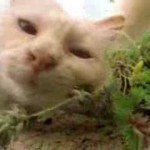It's A Bunch Of Cats Tripping Out On Catnip
