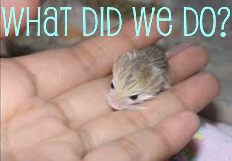 Videogum's 6 Most Misunderstood Animals (So Far!)