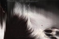 tkapb-marlone-album-art.jpg