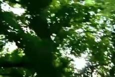 hush-arbors-video-devil.jpg