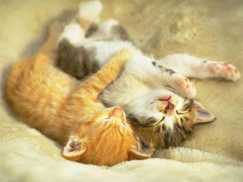 kitten_thread.jpg