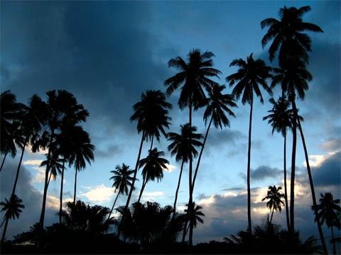 palm_trees.jpg