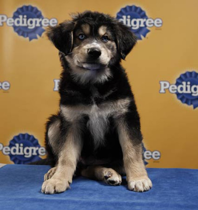 Puppy Bowl Starting Lineup 2010 1