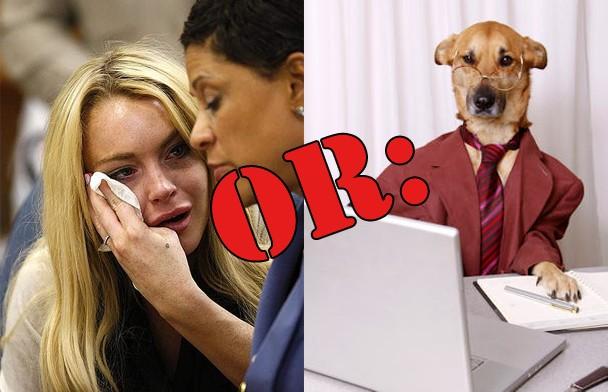 lohan_business_dog