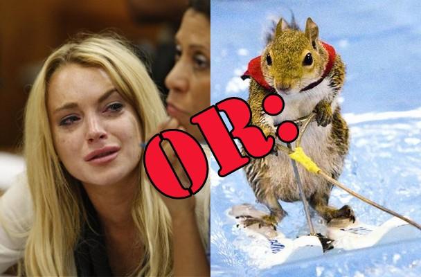 lohan_jail_squirrel