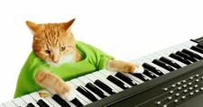 keyboard_cat_pistachios