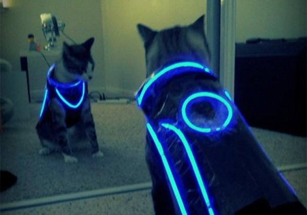 tron_cat