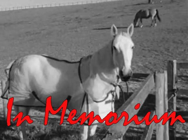 ponies_in_memorium
