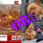 The Japanese Tsunami OR: Pets Taking Naps