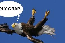 holy crap bird