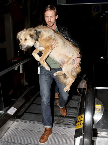 ryan_gosling_dog