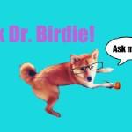 Ask Dr. Birdie: Get Well Soon!