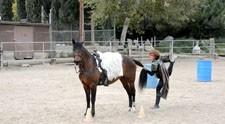 horse_yoga