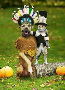 thanksgivinganimals