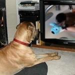 Favorite Animal Videos Of 2011