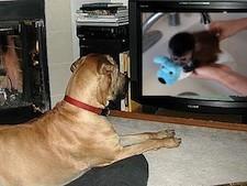 dogwatchingmonkeybath