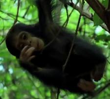 monkeyhanging