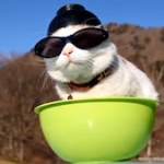 The Petting Zoo: The Week's Top 10 Animal Videos