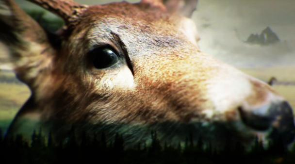 """Shearwater – """"Breaking The Yearlings"""" Video"""