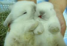 cute_bunnies