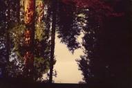 """Dntel – """"Still"""" (Feat. Baths) (Stereogum Premiere)"""