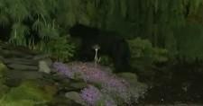 bear_alert