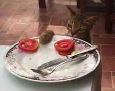 tomato_cat