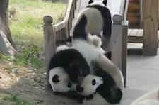 zoo_pandas