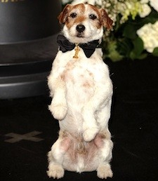 uggie_party