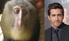 jake-monkey