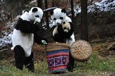 dumb_panda