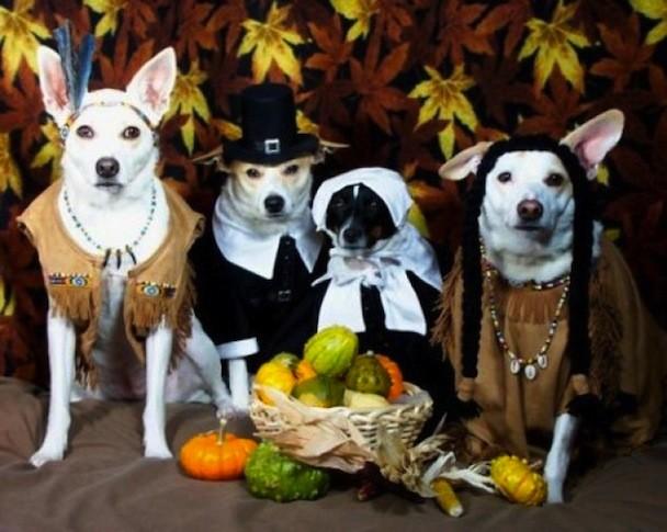 animal_thanksgiving