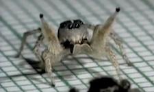 salsa_spider